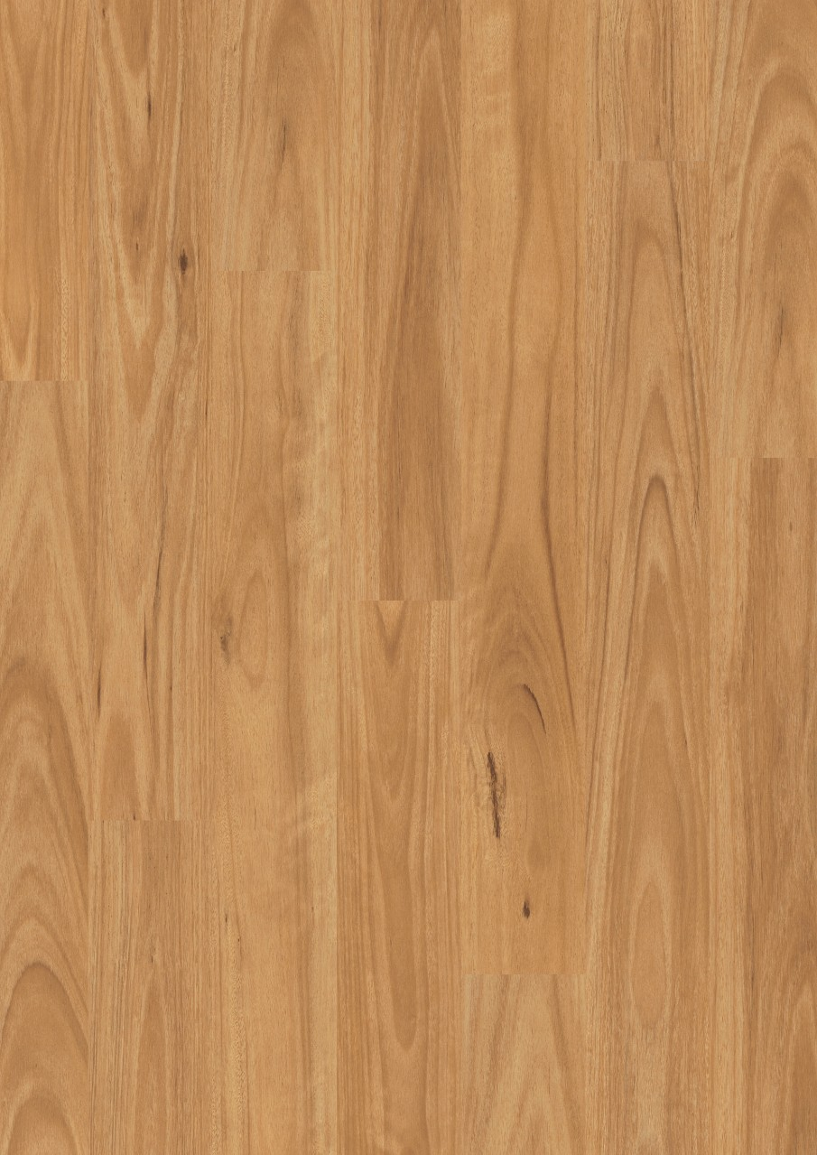 Dark brown Eligna Laminate Blackbutt EL1691