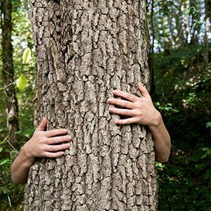 Quick-Step wood helps us breathe