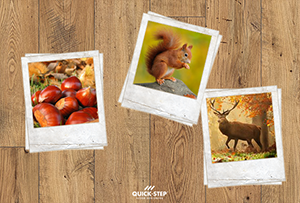 Autumn, the most colorful season. Fauna and flora are wild about natural chestnut